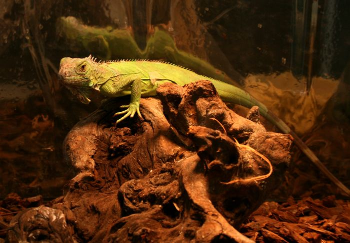 Lighting And Heat Bulbs For Your Pet Reptiles
