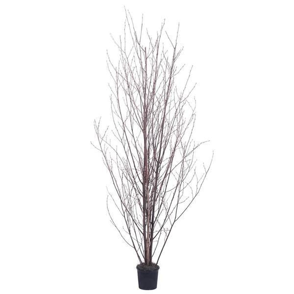 vickerman 319055   office tree
