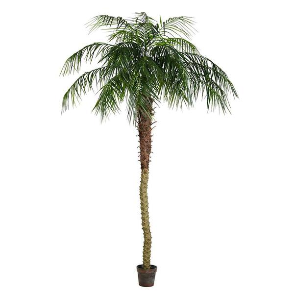 8 phoenix palm tree - Christmas Palm Tree Pictures
